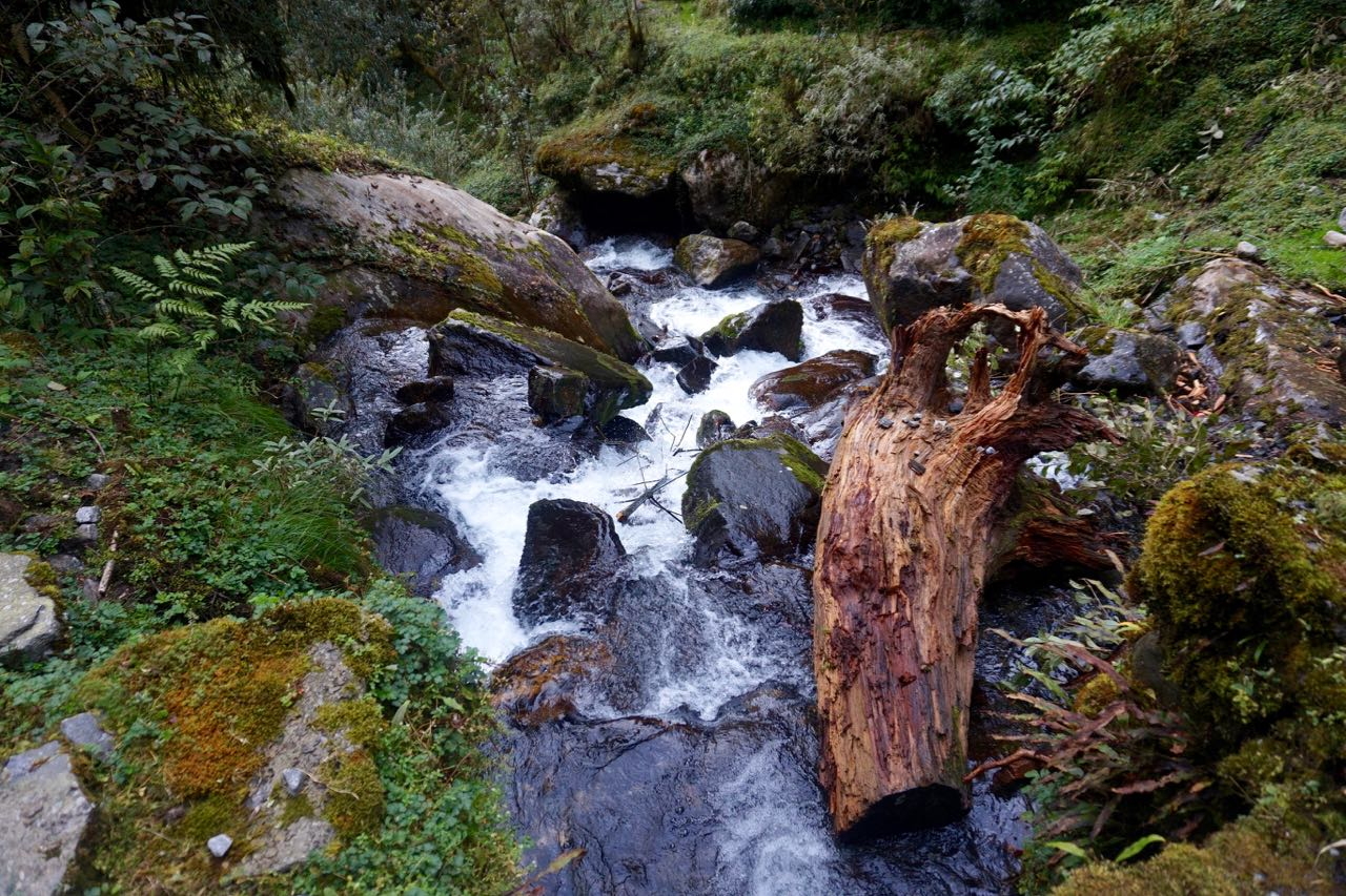 The beautiful Rivers and Moss Covered Vegetation