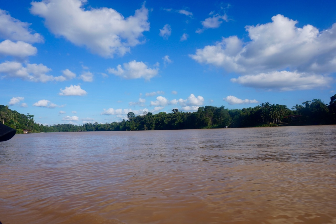 The chocolatey brown river that is Kinabatangan