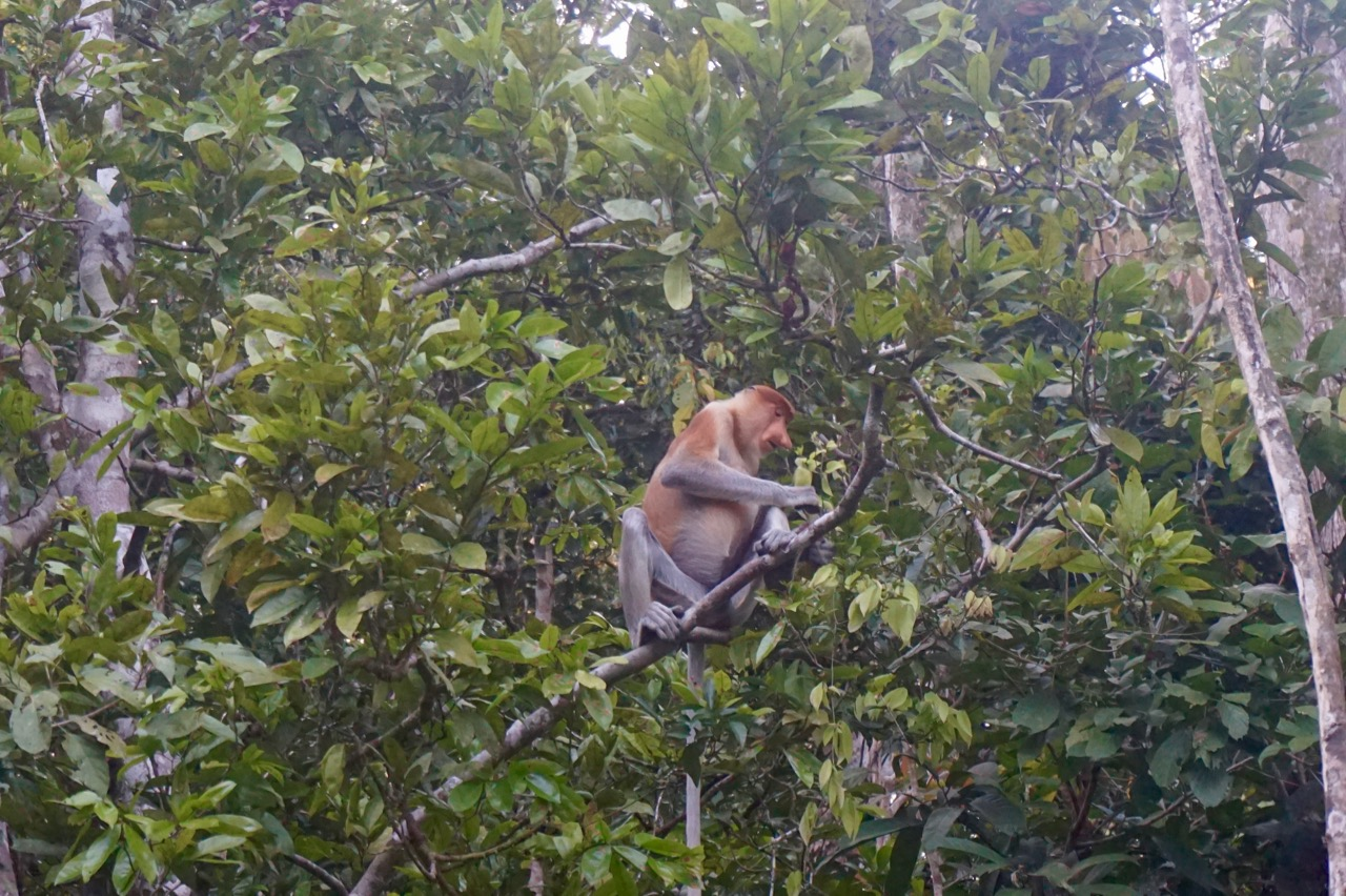 The strangest monkey on earth